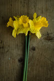 Narcissus flowers on wooden table Royalty Free Stock Photos