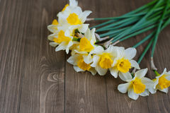 Narcissus flowers Stock Photo
