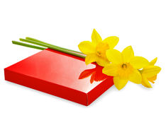 Narcissus and gift box on white Royalty Free Stock Photo