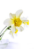 Narcissus in a glass vase. Photo in high key Stock Photography