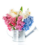 Narcissus and hyacinth. spring flowers over white Stock Image