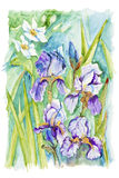 Narcissus and irises Stock Images