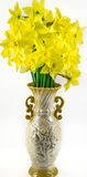 Narcissus. Isolated on a white background Stock Photography
