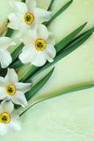 Narcissus poeticus Stock Photos