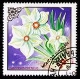 Narcissus poeticus, Garden flowers serie, circa 1983 Stock Photos