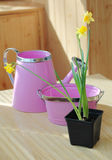 Narcissus, pot and watering. Flowers, pot and watering on the table Stock Photo
