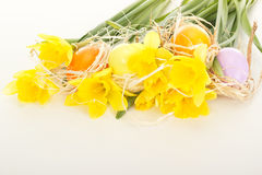 Narcissus pseudonarcissus with easter eggs Royalty Free Stock Images