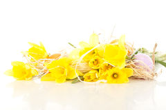 Narcissus pseudonarcissus with easter eggs Royalty Free Stock Image