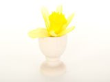 Narcissus pseudonarcissus in an egg cup Royalty Free Stock Images