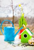 Narcissus in red pot with blue wateriing-can and shovel in spring Stock Image