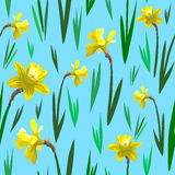 Narcissus seamless pattern, background. Texture, textile, backdrop, fabric Royalty Free Stock Image