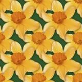 Narcissus Seamless Texture fotografering för bildbyråer