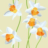 Narcissus seamless vector pattern Stock Images