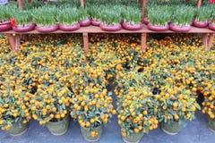 Narcissus & Tangerine Stock Image