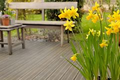 Narcissus on terrace Stock Photography