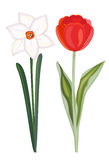 Narcissus and tulip Stock Photography