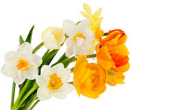 Narcissus and tulips Royalty Free Stock Image