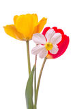 Narcissus and two tulip Royalty Free Stock Photography