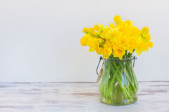 Narcissus in vase stock images