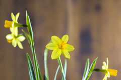 Narcissus on wooden background Royalty Free Stock Photos