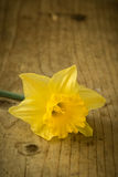 Narcissus on wooden table Stock Photo