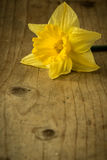 Narcissus on wooden table Stock Images