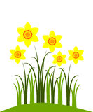 Narcissuses Royalty Free Stock Photo