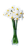 Narcissuses Royalty Free Stock Images