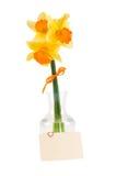 Narcissuses amarelos no vaso e no cartão com decorati Fotografia de Stock