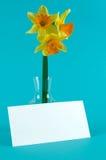 Narcissuses gialli in vaso con la scheda Fotografia Stock