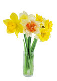 Narcissuses in a glass. Isolated on a white background Royalty Free Stock Image