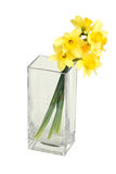 Narcissuses in a square vase Royalty Free Stock Photo