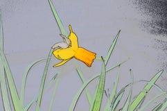 Narcisuss gialli dei fiori dei profili Immagine Stock Libera da Diritti