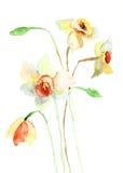 Narcyzów kwiaty Fotografia Stock