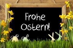 Narcyz, jajko, królik, Frohe Ostern Znaczy Szczęśliwą wielkanoc Zdjęcie Royalty Free