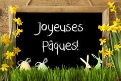 Narcyz, jajko, królik, Joyeuses Paques Znaczy Szczęśliwą wielkanoc Obrazy Stock