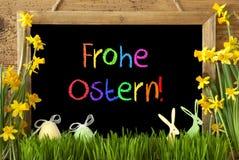 Narcyz, jajko, królik, Kolorowy Frohe Ostern Znaczy Szczęśliwą wielkanoc Zdjęcia Royalty Free