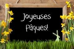 Narcyz, królik, Joyeuses Paques Znaczy Szczęśliwą wielkanoc Zdjęcie Stock