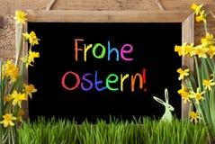 Narcyz, królik, Kolorowy Frohe Ostern Znaczy Szczęśliwą wielkanoc Obraz Stock