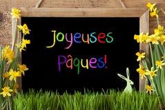 Narcyz, królik, Kolorowy Joyeuses Paques Znaczy Szczęśliwą wielkanoc Obraz Royalty Free