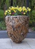 narcyza kolor żółty wazowy drewniany obraz stock