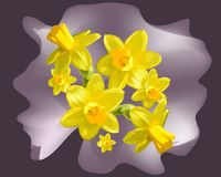 Narcyza wektor, odizolowywający kwiat royalty ilustracja