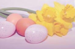 narcyzy Wielkanoc jaj Obrazy Stock
