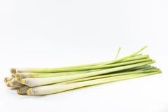 Nardo isolado no fundo branco Vegetal ou erva e ingrediente Fotografia de Stock