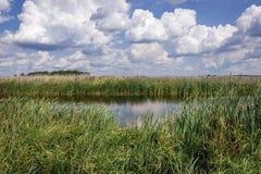 Free Narew National Park In Poland Royalty Free Stock Photos - 171067718
