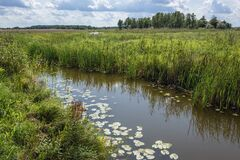Free Narew National Park In Poland Royalty Free Stock Photography - 171067747