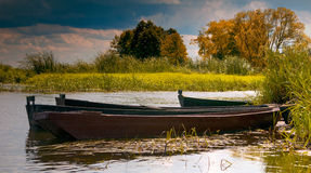 On the Narew Royalty Free Stock Image