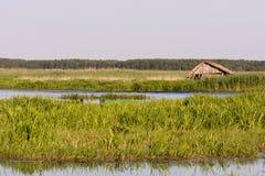 Narew park narodowy Obrazy Royalty Free
