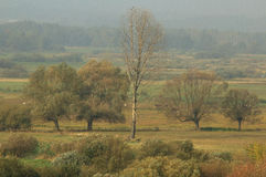 Narew Valley Stock Photos