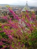 Narikala, Тбилиси, Georgia Стоковое Изображение RF